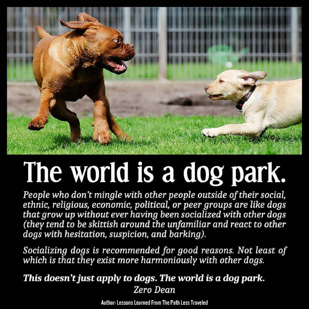 the-world-is-a-dog-park-zero-dean-dogs